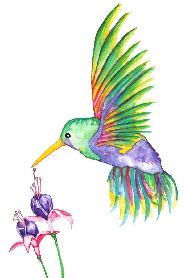 Acuarela de las flores del colibrí y del fucsia ilustración del vector