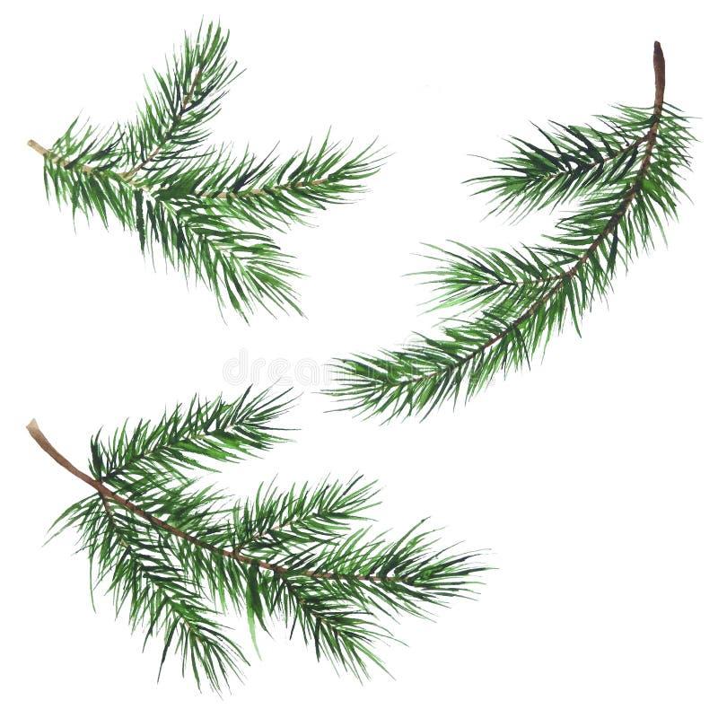 Acuarela determinada de la Navidad del Año Nuevo de las ramas del abeto stock de ilustración