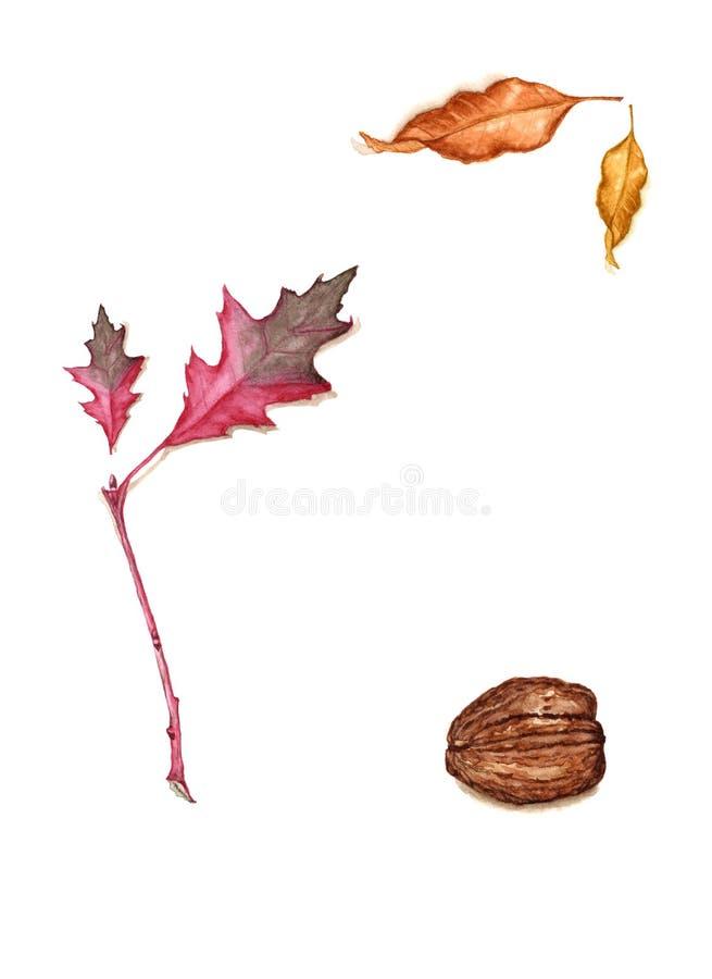Acuarela dibujada mano del follaje de otoño y de las nueces ilustración del vector