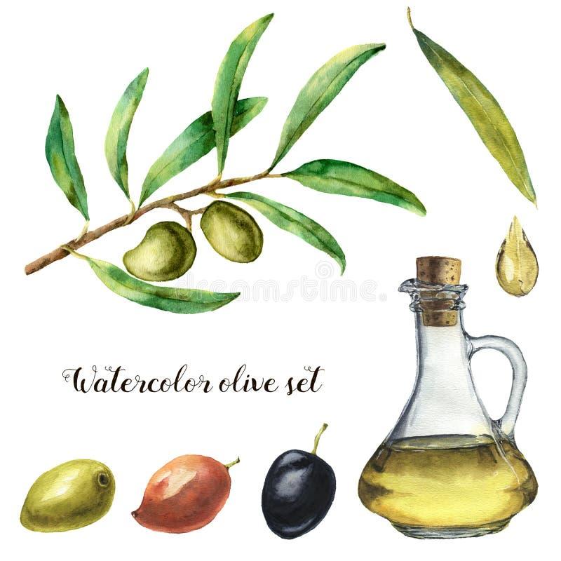 Acuarela fijada con la aceituna Ejemplo pintado a mano con las bayas verdes olivas, la botella con aceite de oliva y las ramas de libre illustration