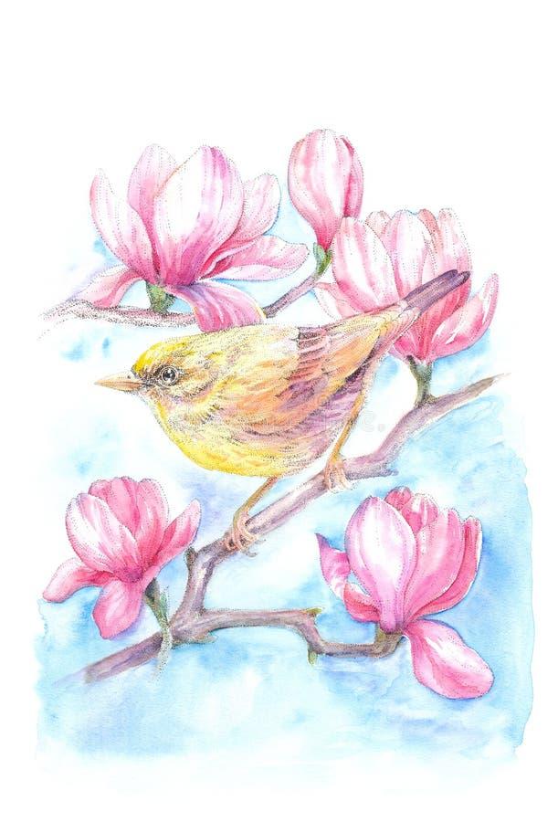 Acuarela, pequeño pájaro con las flores de la magnolia stock de ilustración
