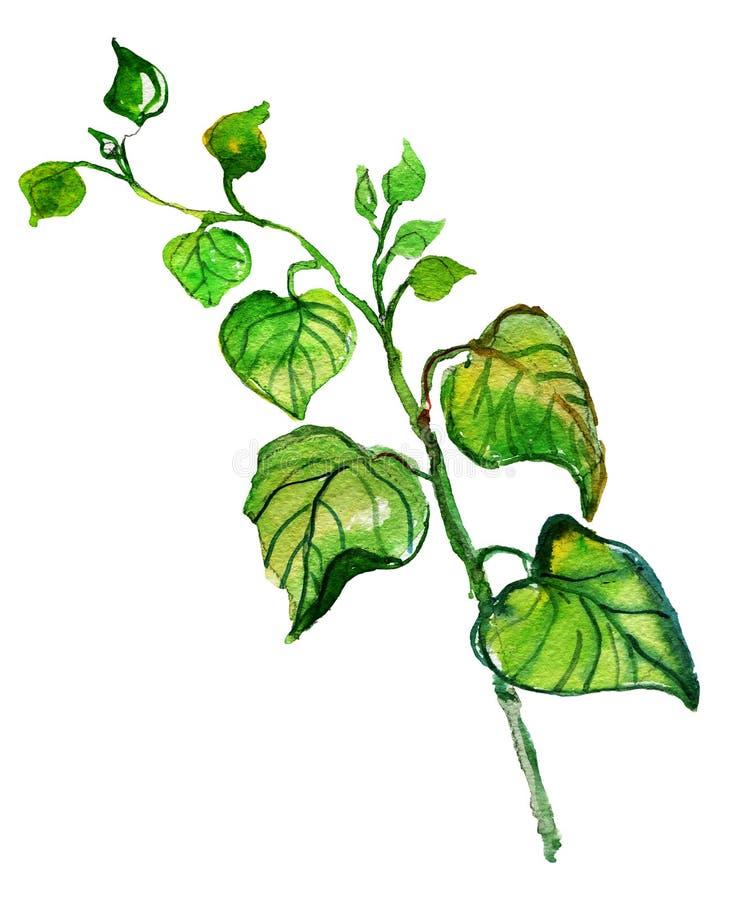 Acuarela que dibuja brunches verdes con las hojas, stock de ilustración