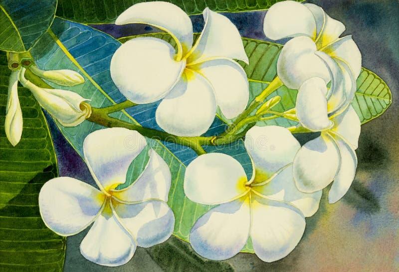 Acuarela que pinta la flor blanca realista original del frangipani ilustración del vector