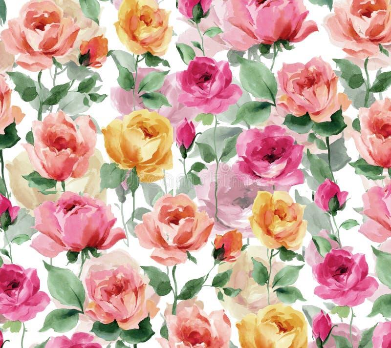 Acuarela que pinta Rose Blossoms y los brotes color de rosa en un fondo blanco ilustración del vector