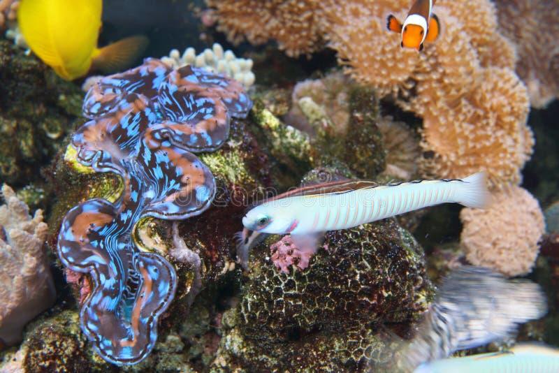 Download Acuario foto de archivo. Imagen de océano, color, acuario - 41904330