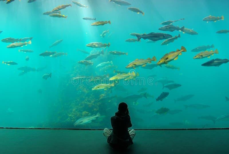 Acuario Alesund del parque zoológico. Noruega fotografía de archivo