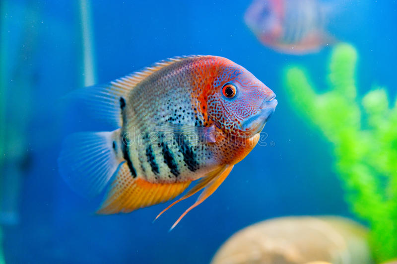 Acuario colorido de los pescados fotografía de archivo libre de regalías