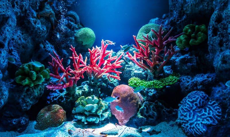 Acuario con el coral imágenes de archivo libres de regalías