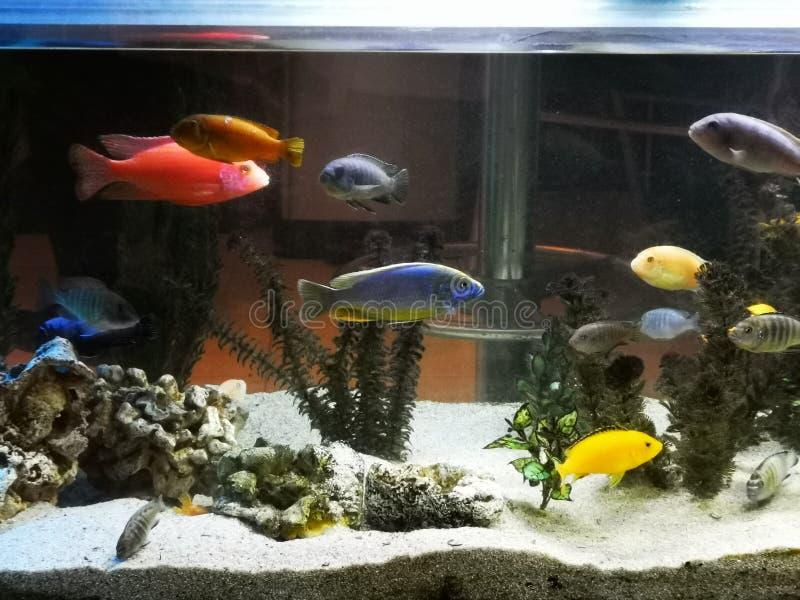 Acuario con los pescados exóticos de diversas especies imagen de archivo