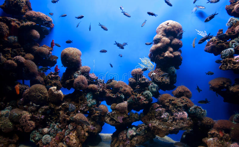 Acuario coralino imagen de archivo