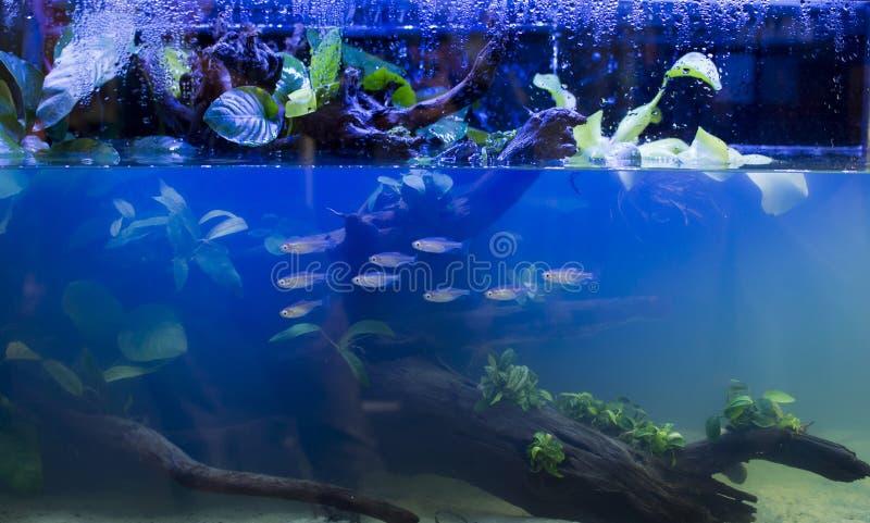 Acuario de agua dulce foto de archivo