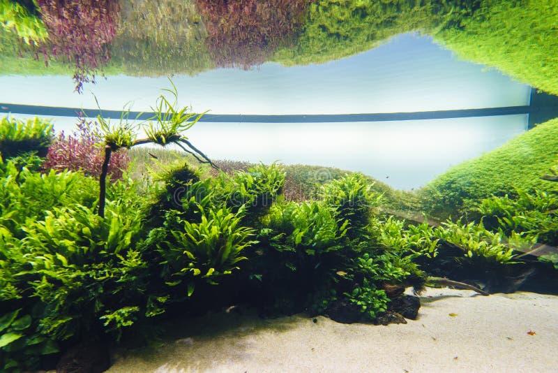 Acuario de agua dulce de la naturaleza en el estilo de Takasi Amano imagen de archivo libre de regalías