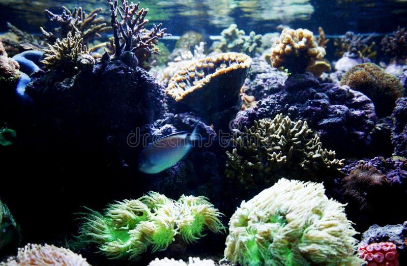 Acuario de los pescados fotografía de archivo libre de regalías