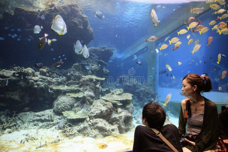 Acuario de Okinawa foto de archivo libre de regalías