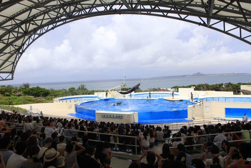 Acuario de Okinawa foto de archivo