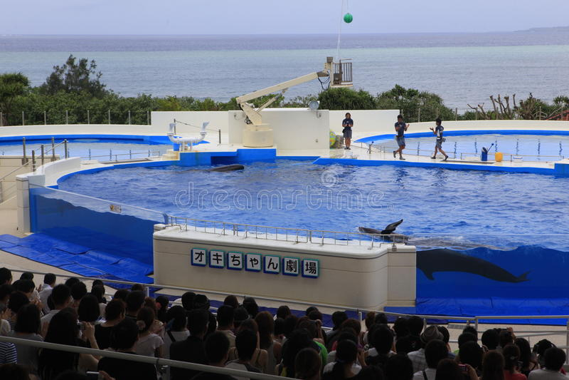 Acuario de Okinawa imagenes de archivo