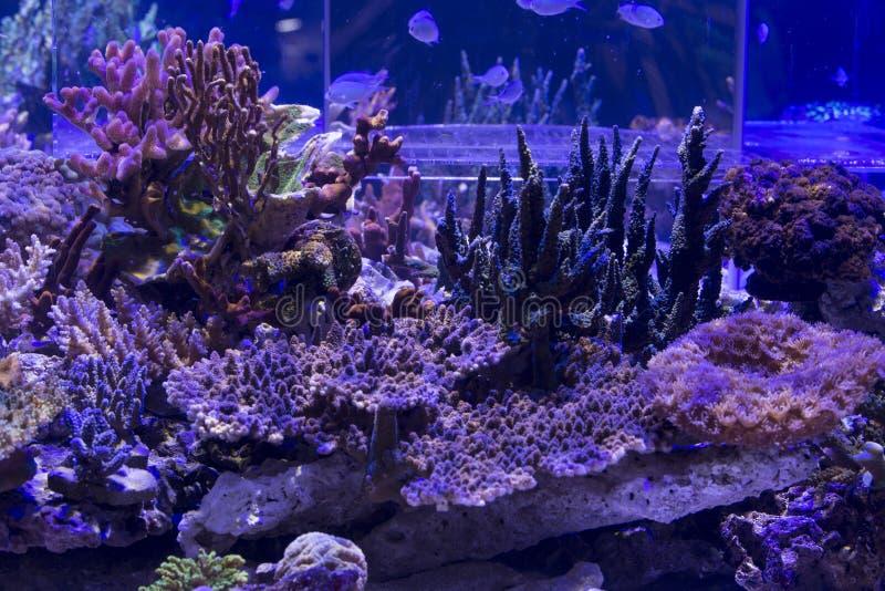 Acuario del arrecife de coral fotografía de archivo