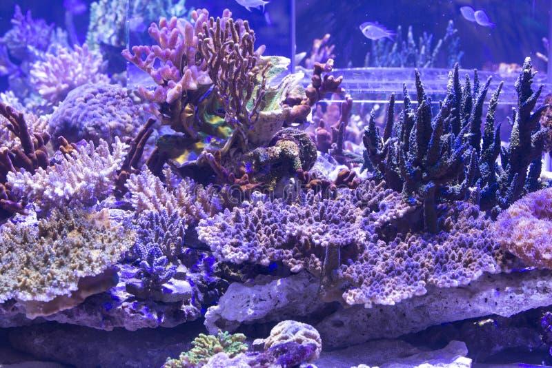 Acuario del arrecife de coral fotos de archivo libres de regalías