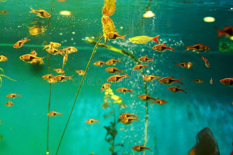 Acuario tropical del tanque de pescados foto de archivo libre de regalías