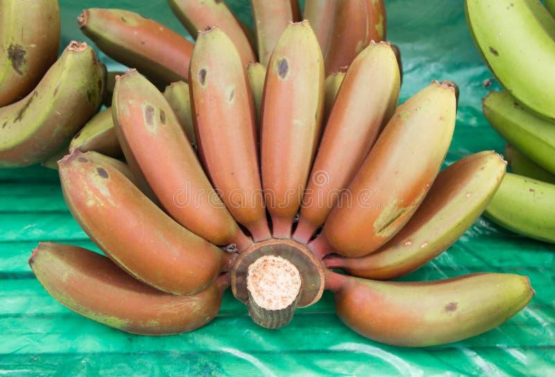 Acuminata rouge 'Dacca rouge de groupe-Musa de banane photos libres de droits