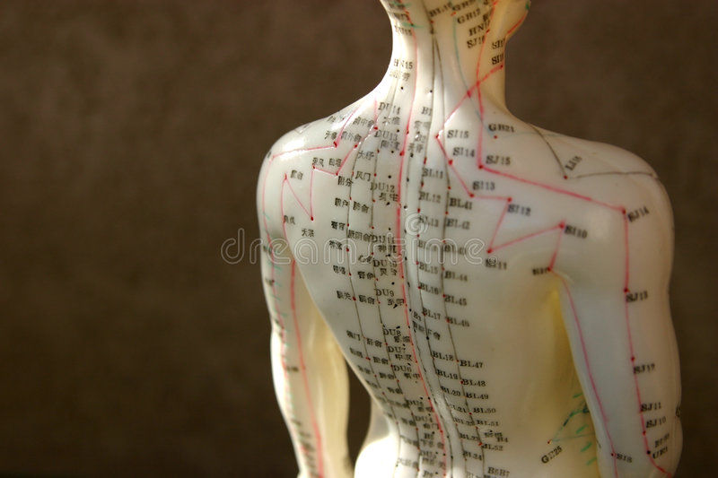 Acupuncture dummy back and shoulder royalty free stock images