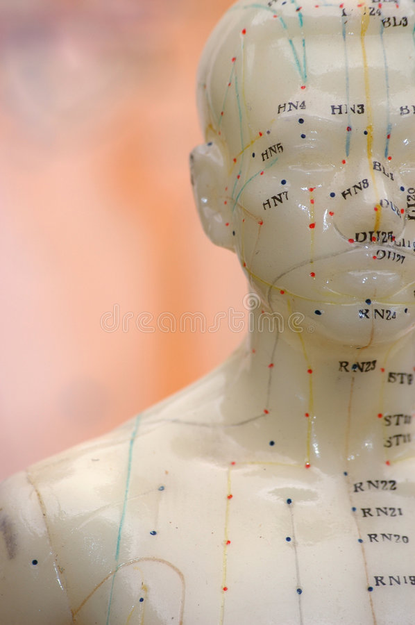 Acupuncture Model Background  royalty free stock image