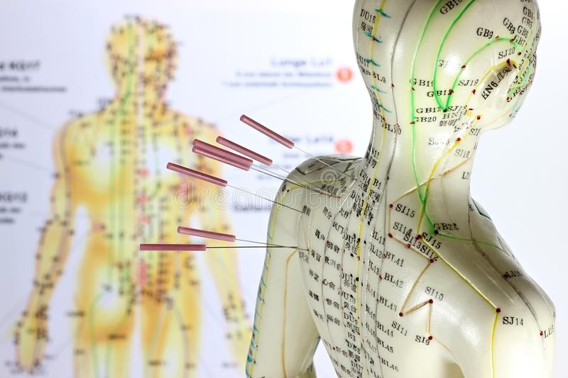 Acupuncture model stock photo