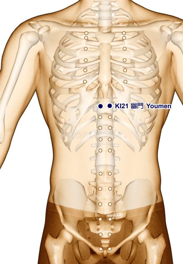 Acupuncture point Drawing KI21 Youmen, 3D Illustration stock photos