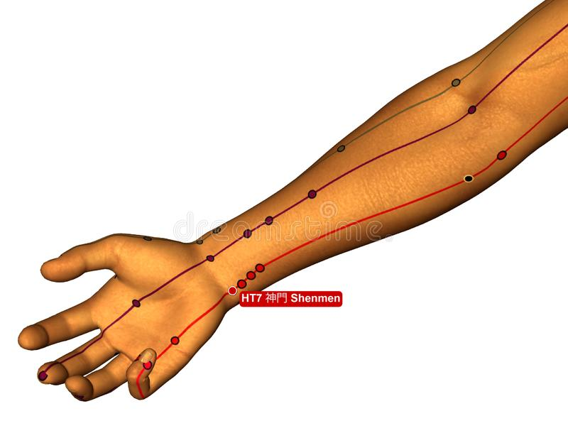 Acupuncture Point HT7 Shenmen, 3D Illustration, White Background royalty free stock photo