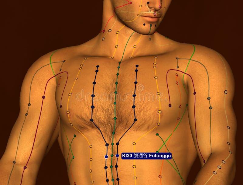 Acupuncture Point KI20 Futonggu, 3D Illustration, Brown Background royalty free stock photos