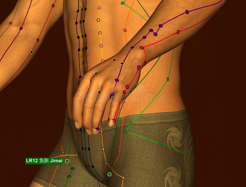 Acupuncture Point LR12 Jimai, 3D Illustration, Brown Background stock photos