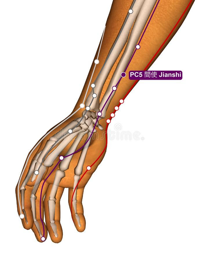 Acupuncture Point PC5 Jianshi, 3D Illustration royalty free stock images