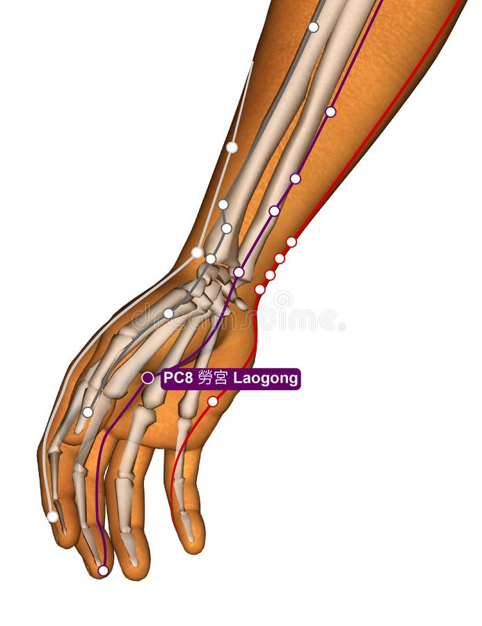 Acupuncture Point PC8 Laogong, 3D Illustration stock photo