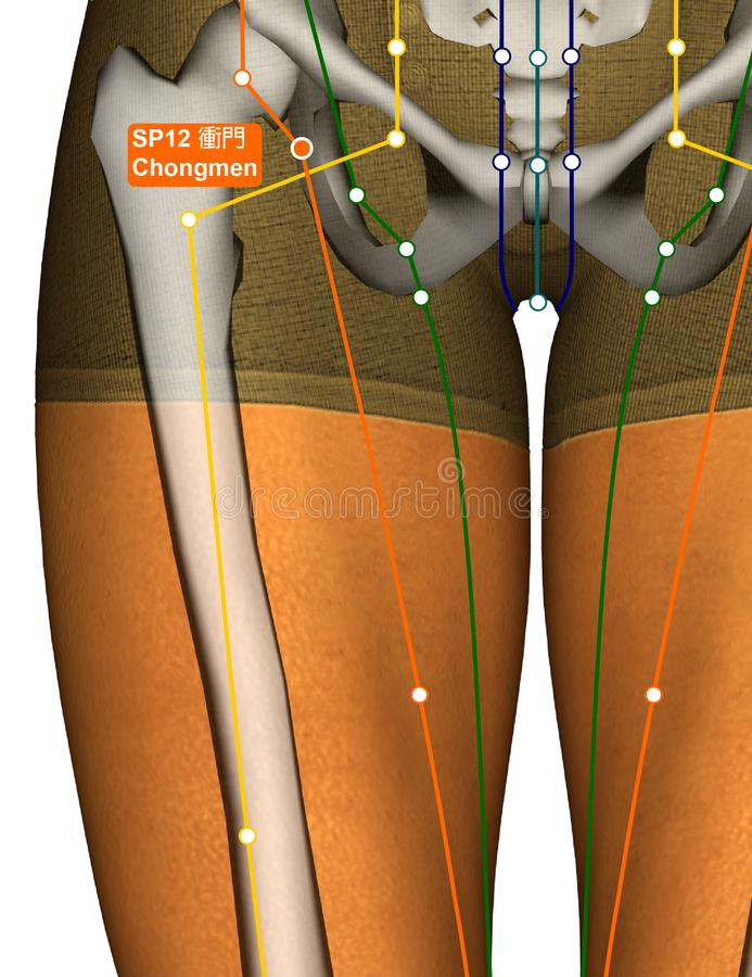 Acupuncture Point SP12 Chongmen, 3D Illustration royalty free stock photography