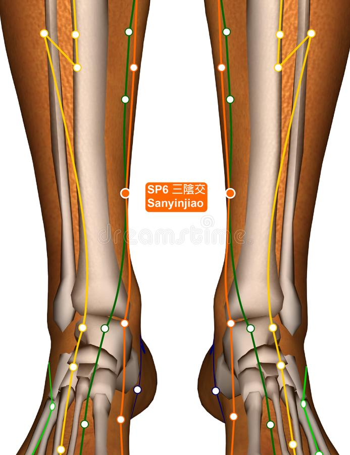 Acupuncture Point SP6 Sanyinjiao, 3D Illustration royalty free stock image