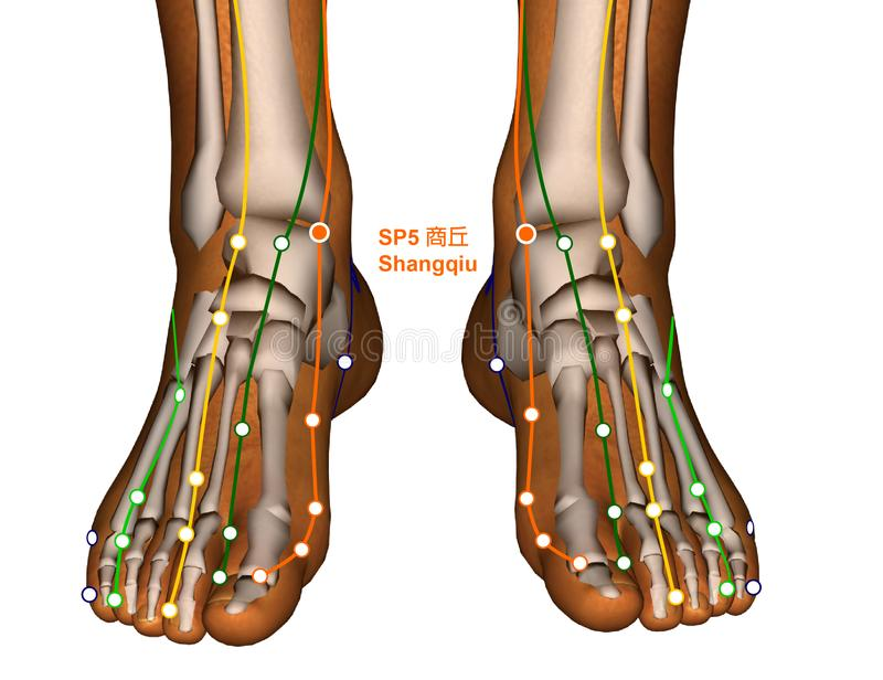 Acupuncture Point SP5 Shangqiu, 3D Illustration stock images