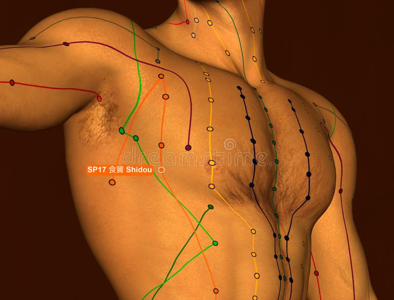 Acupuncture Point SP17 Shidou, 3D Illustration, Brown Background stock photography