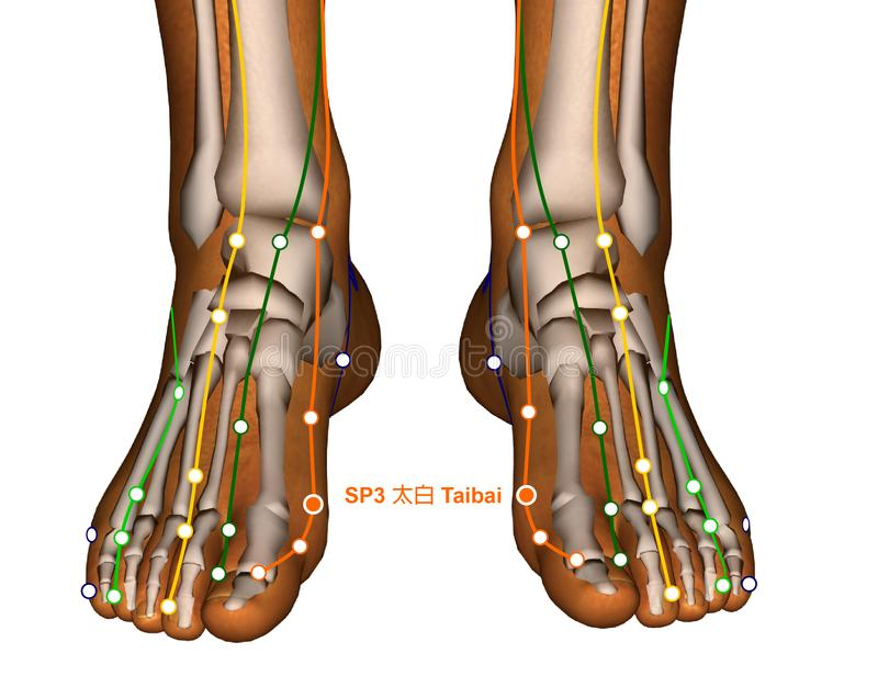 Acupuncture Point SP3 Taibai, 3D Illustration royalty free stock image