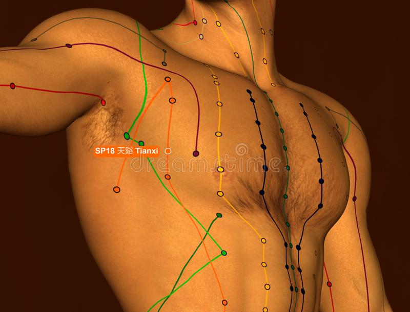 Acupuncture Point SP18 Tianxi, 3D Illustration, Brown Background royalty free stock photo