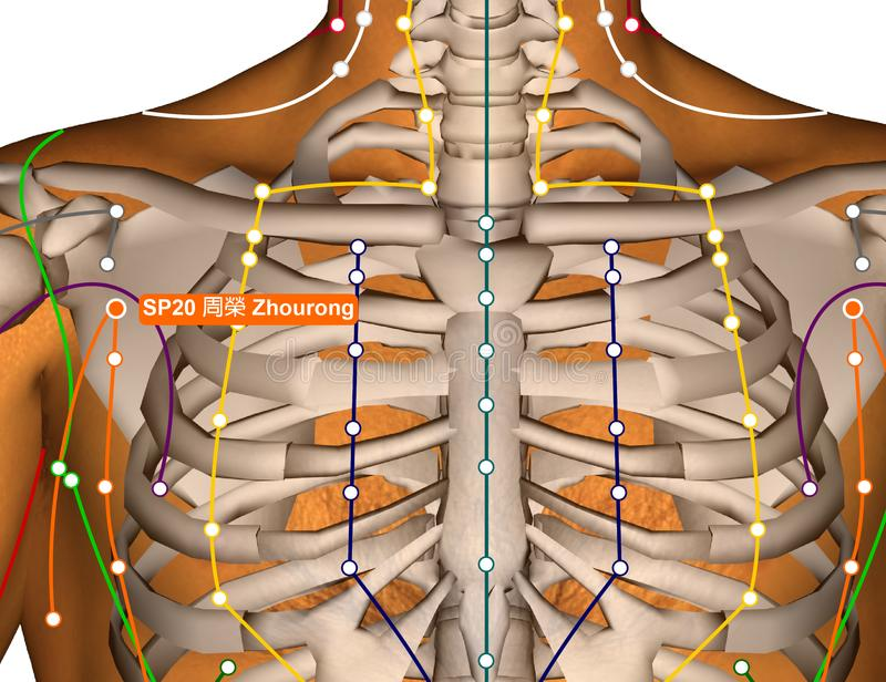 Acupuncture Point SP20 Zhourong, 3D Illustration royalty free stock photography