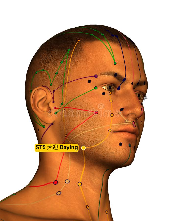 Acupuncture Point ST5 Daying, 3D Illustration, White Background royalty free stock images