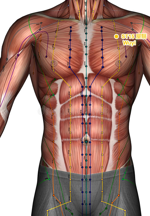 Acupuncture point ST15 Wuyi, 3D Illustration royalty free stock photography