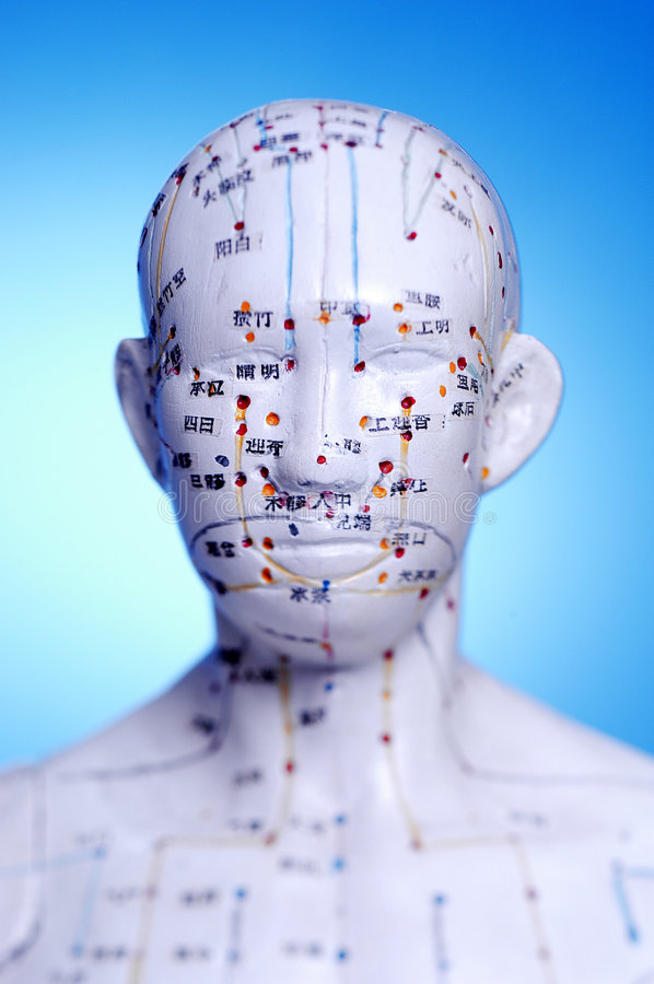 Acupuncture Points and Meridian. Model used to demonstrate acupunture points and meridian stock images