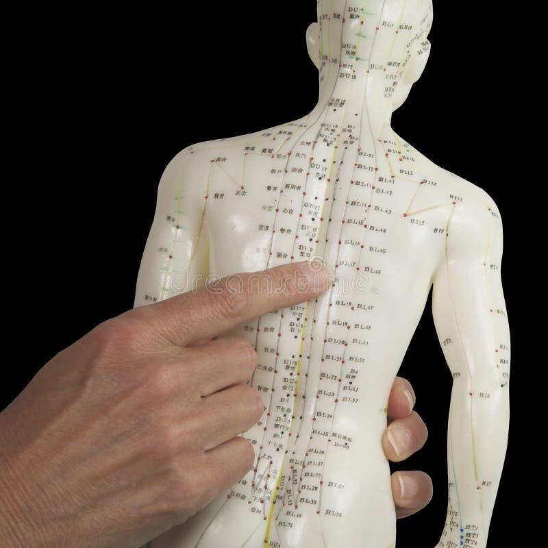 Acupuncturist die aan BL17 op Acupunctuurmodel richten stock afbeelding