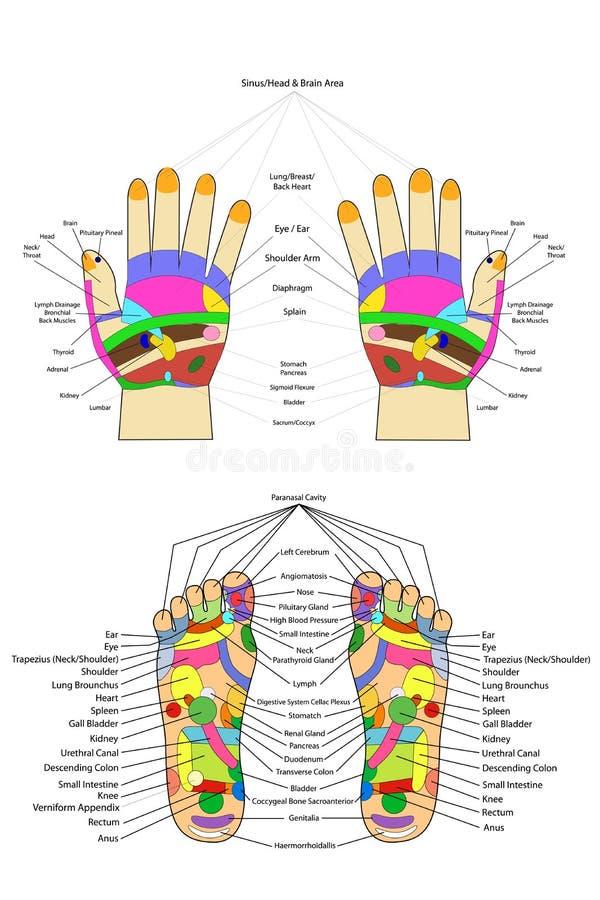 Acupunctuur - Hand en voet, met Engelse teksten, die op wit worden geïsoleerd stock illustratie