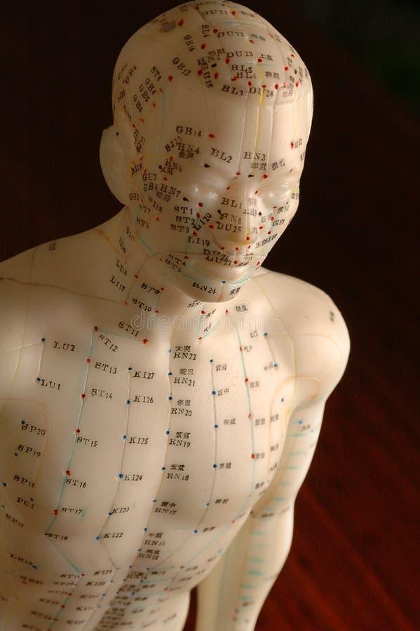 Acupunctuur hoogste lijnen die ledenpopbeeldje opleiden royalty-vrije stock afbeelding