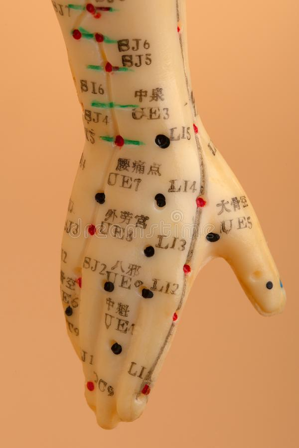 Acupunctuur ModelHand stock afbeeldingen