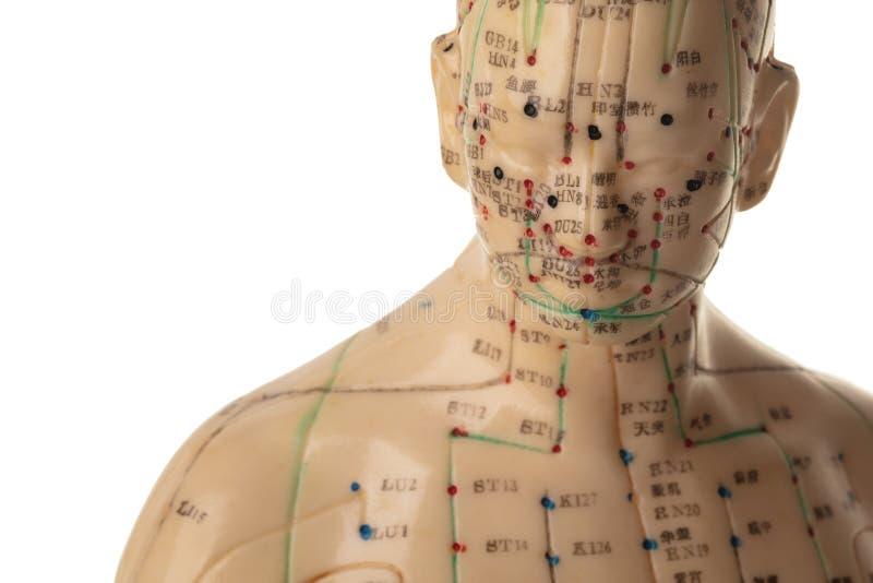 Acupunctuurmodel stock afbeeldingen