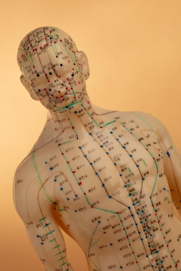 Acupunctuurmodel stock fotografie