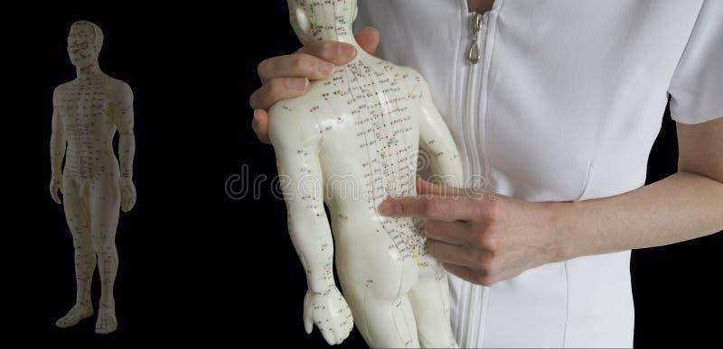 Acupunctuurmodel - Traditionele Chinese Geneeskunde Opleiding royalty-vrije stock afbeeldingen